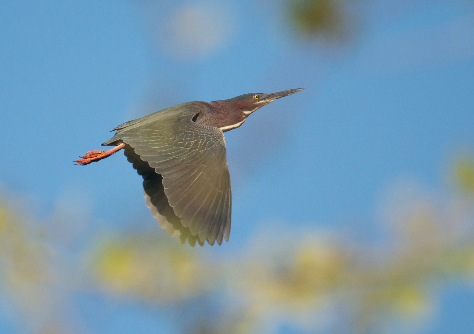 Photograph Flying Greeny by Mike Fuhr on 500px