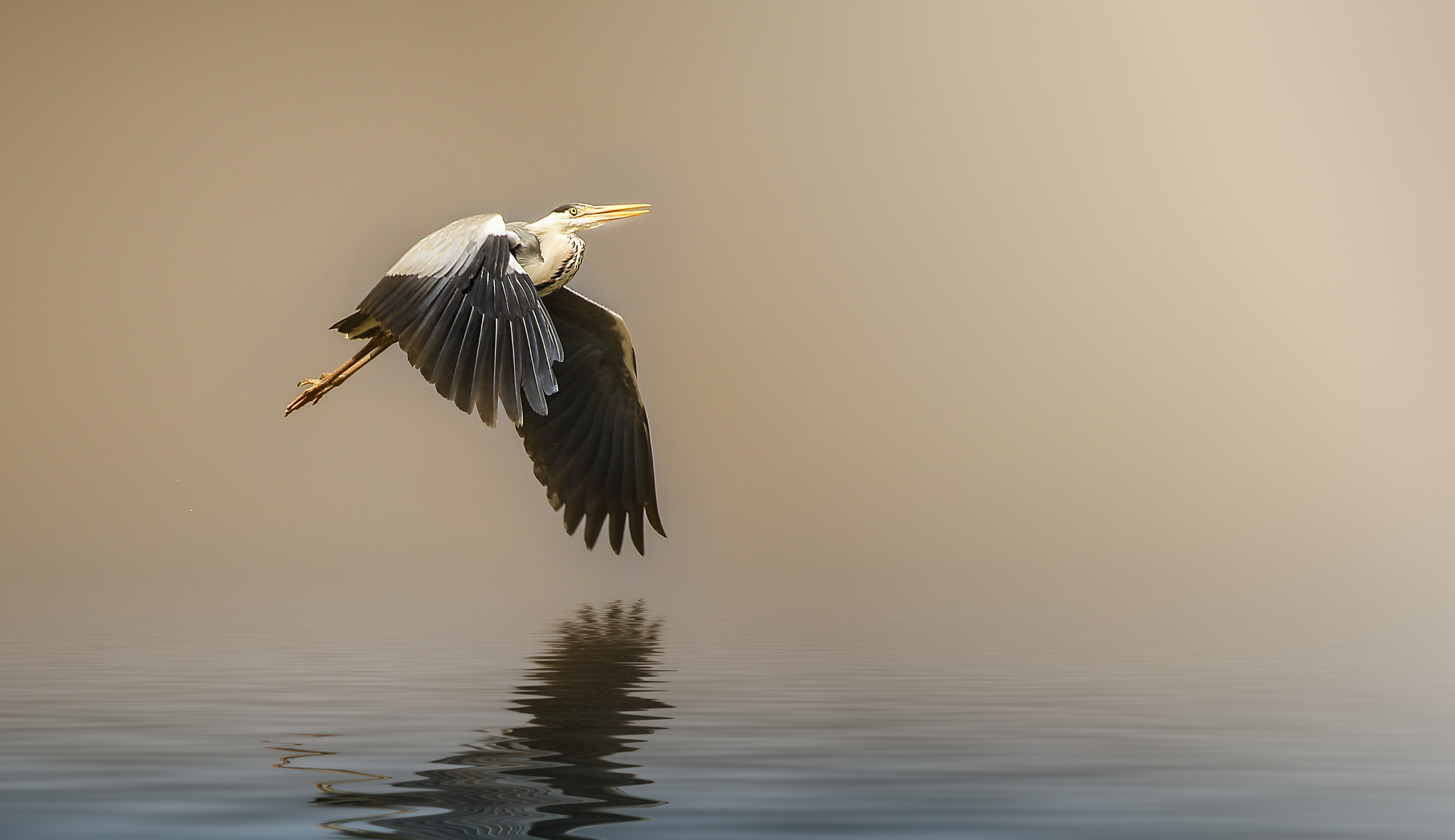 Photograph solo by Detlef Knapp on 500px