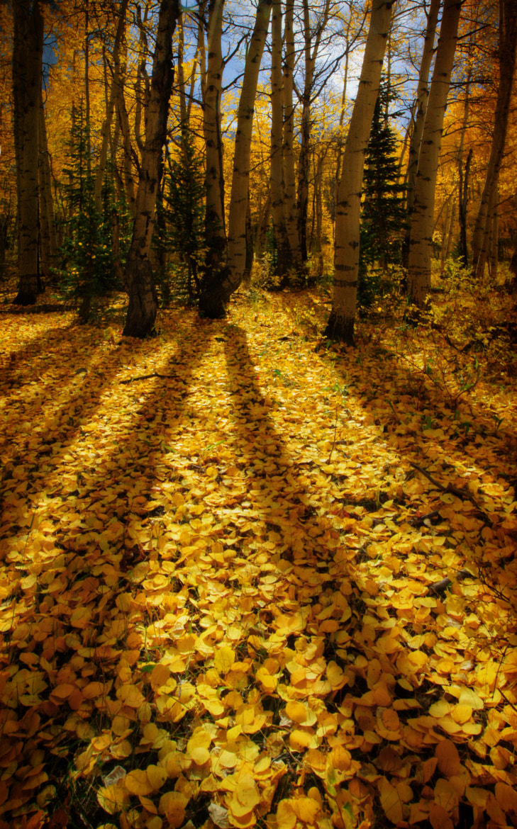 Photograph Long Autumn Shadows by Ron  Azevedo on 500px