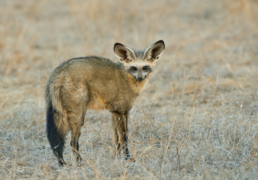 Southern Africa's most beautiful animal?