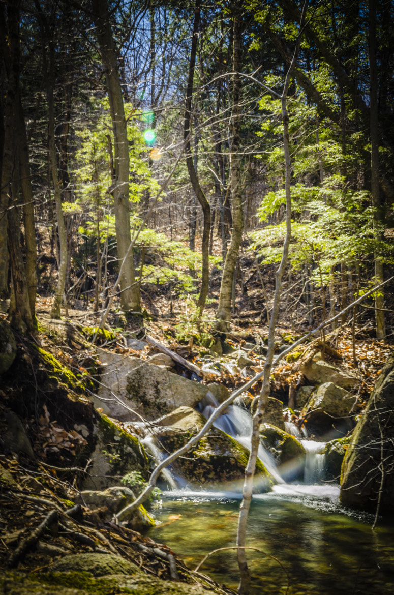 Photograph Stream in the Forest by Daniel Joseph on 500px