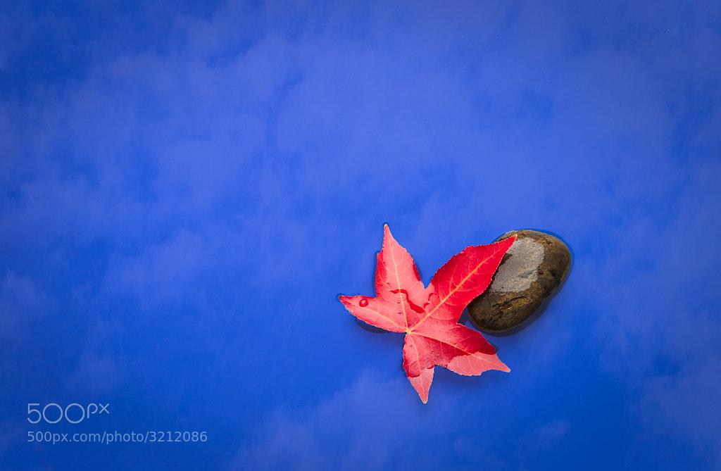 Photograph Leaf by Craig C on 500px