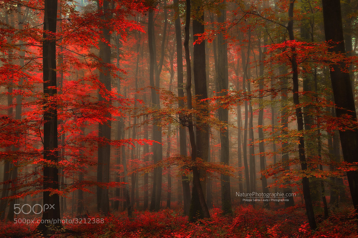 Photograph Enchanting Red by Philippe Sainte-Laudy on 500px