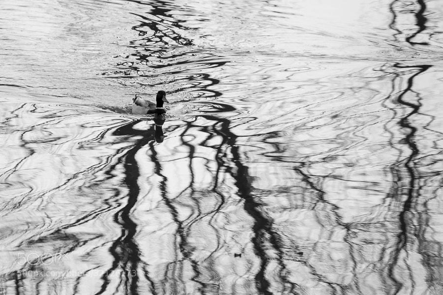 Photograph Линии by Саша aka SAS on 500px