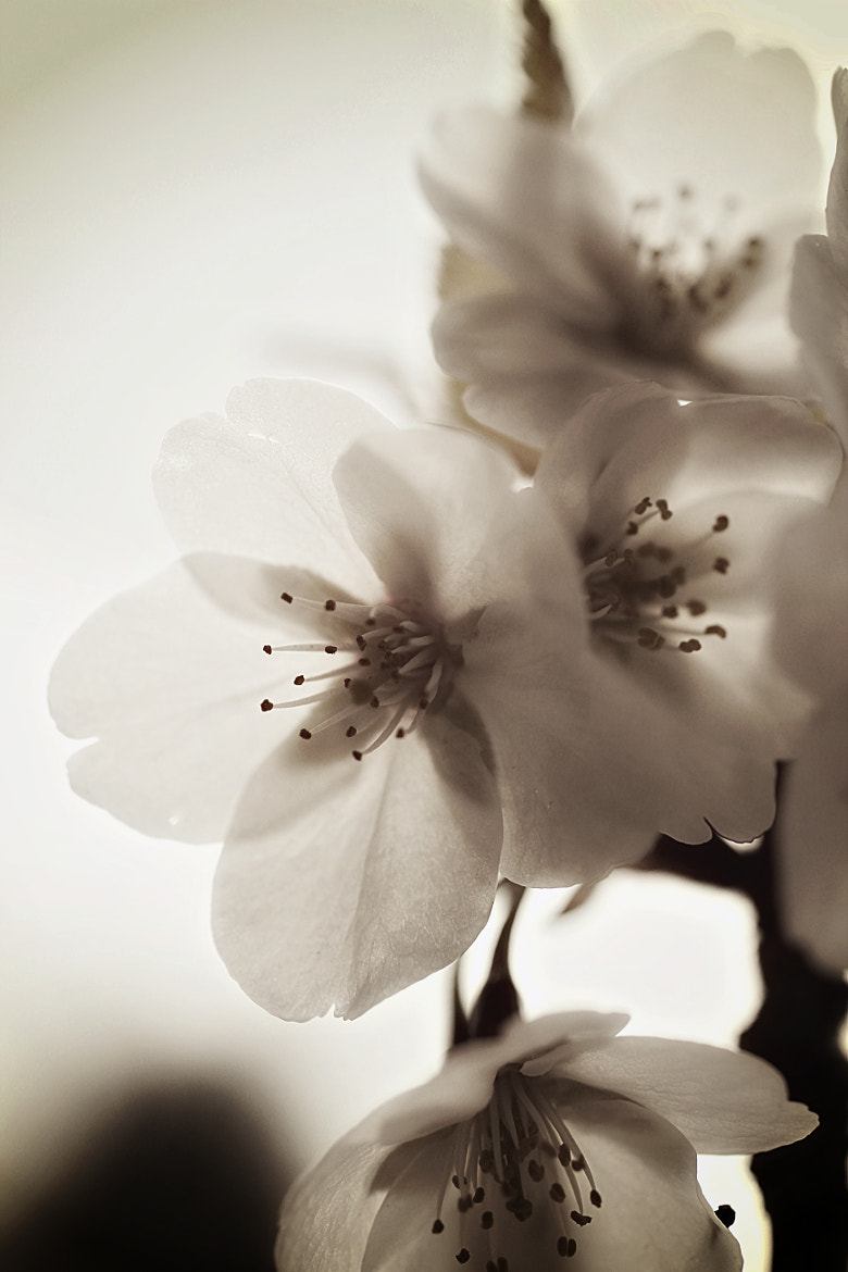 Photograph Petals by Anne Costello on 500px
