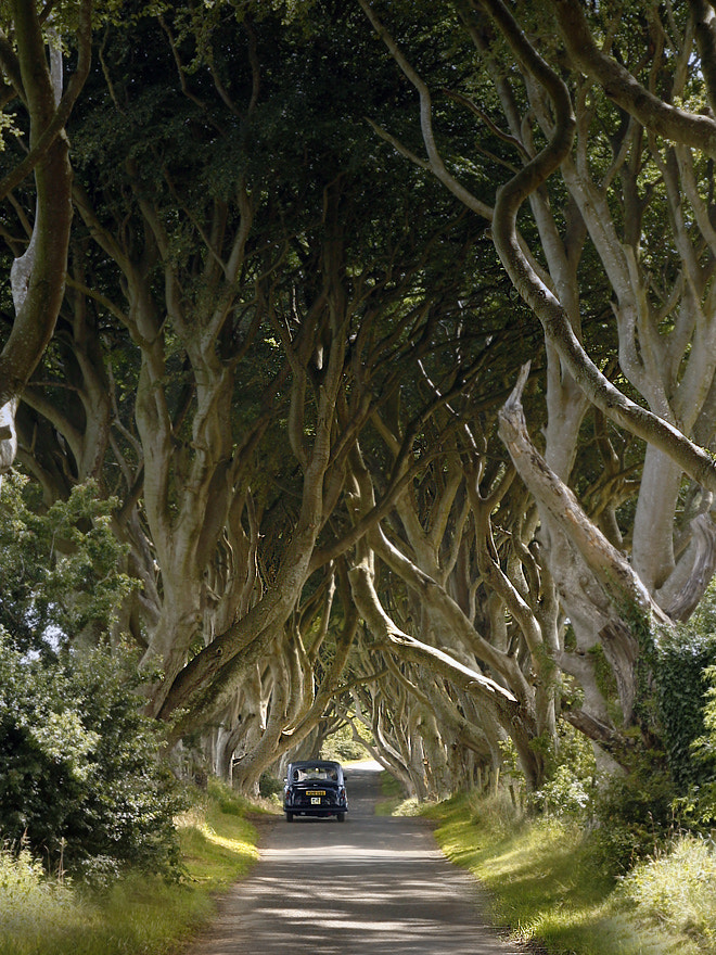 Photograph The Dark Hedges by Annilina Photo on 500px