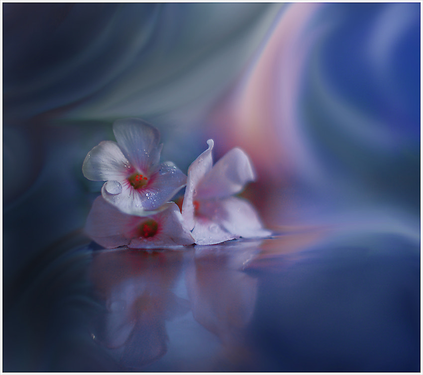 Photograph Beyond the Visible... by Juliana Nan on 500px