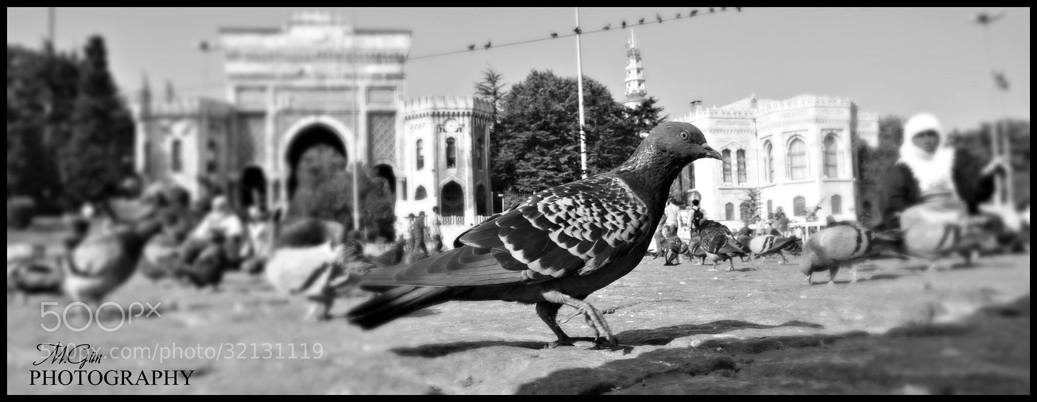 Photograph Beyazıt Meydanı by Melih Gün on 500px