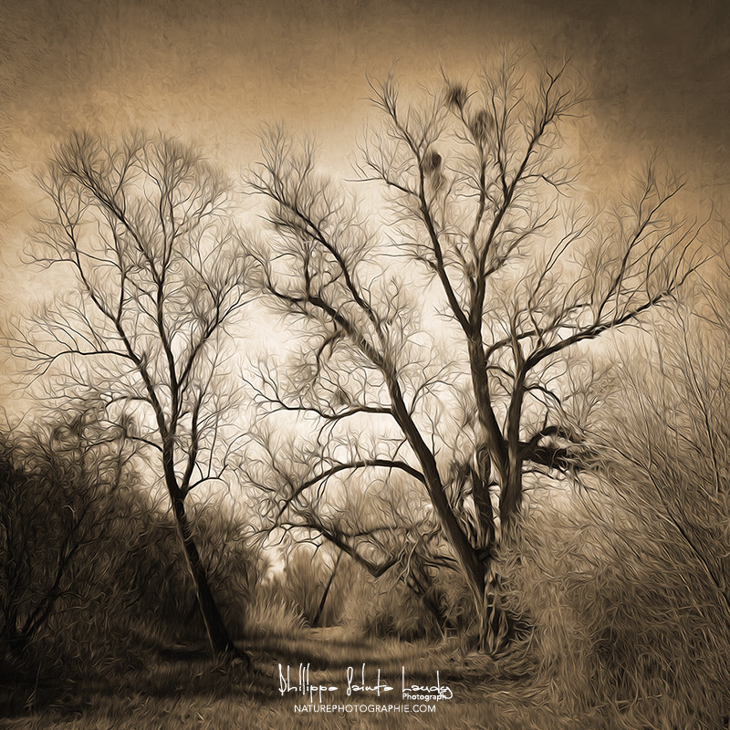 Photograph Sepia Ghost by Philippe Sainte-Laudy on 500px