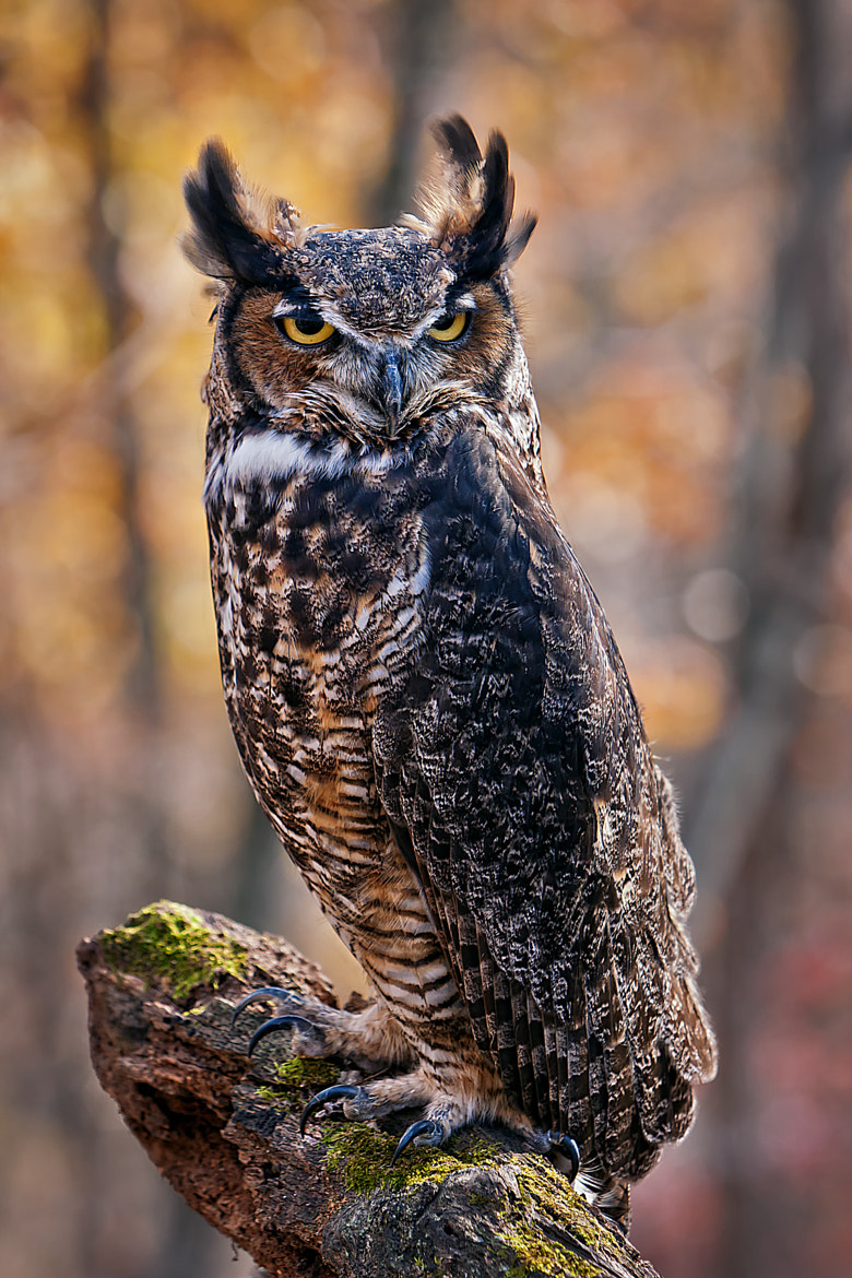Photograph The Wise One by Scott Evers on 500px