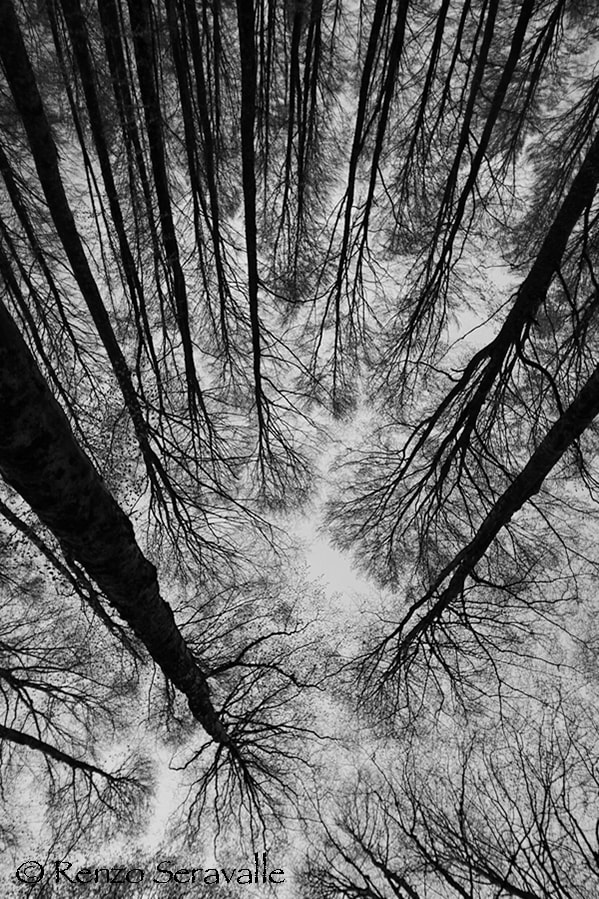 Photograph Root's by Renzo  Seravalle on 500px
