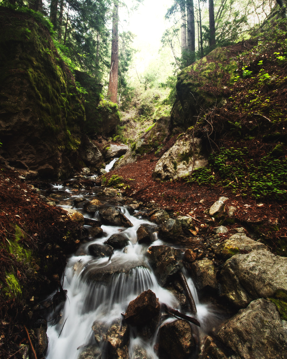 Photograph McWay Creek by Tyler Brigham on 500px