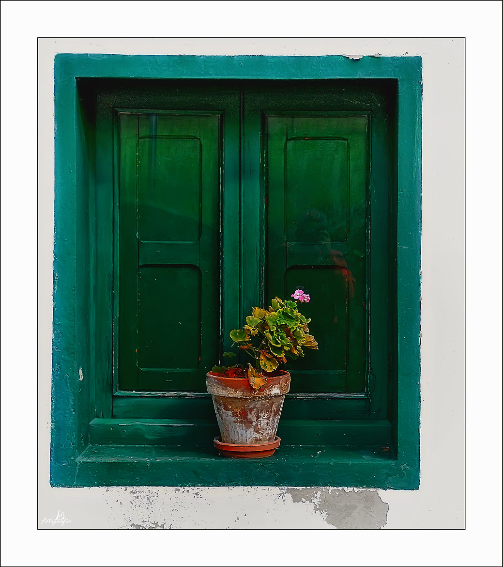 Photograph Windows and balconies VII (The Geranium) by Manuel Lancha on 500px