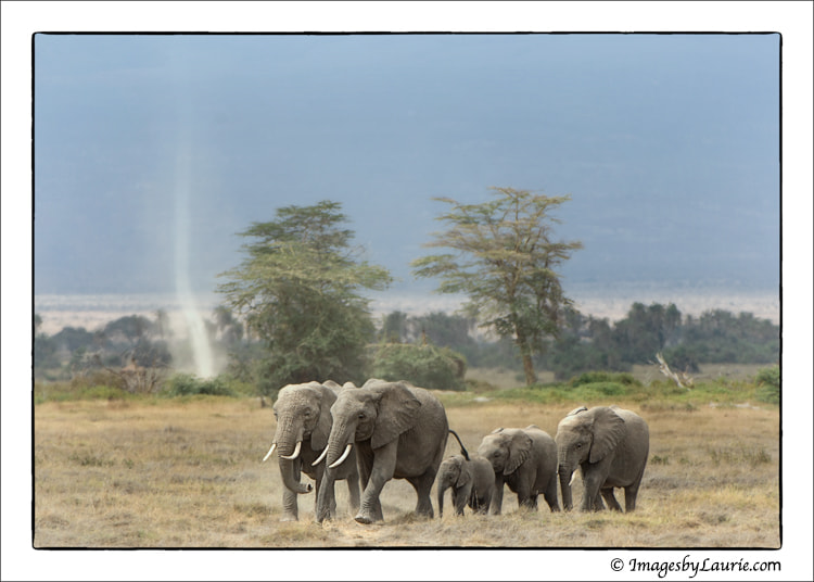 Elephant Herd