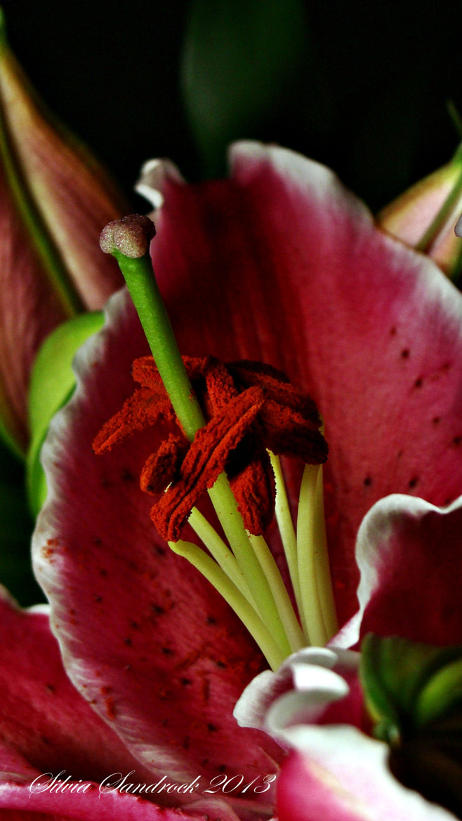 "Photograph At the Heart of the, ""Love Story Lily."" by Silvia Sandrock on 500px"
