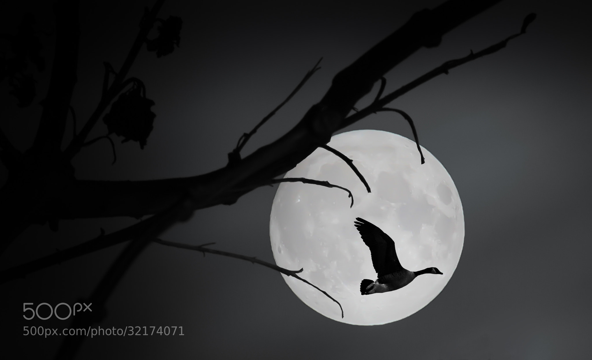 Photograph Peter in the mOOn by Winfried Werner on 500px