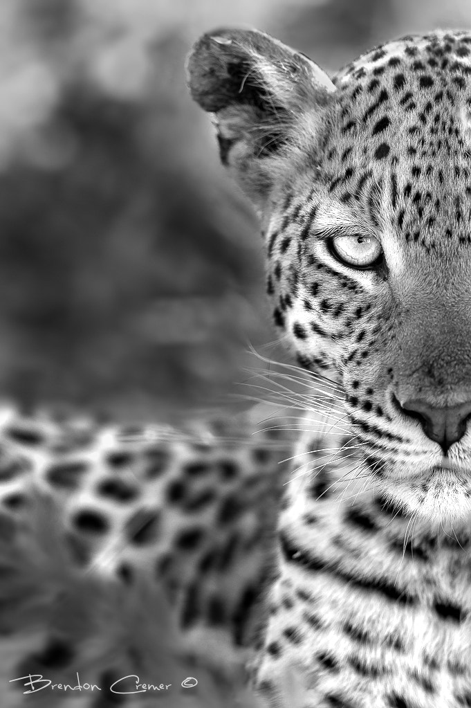 Photograph One on One by Brendon Cremer on 500px