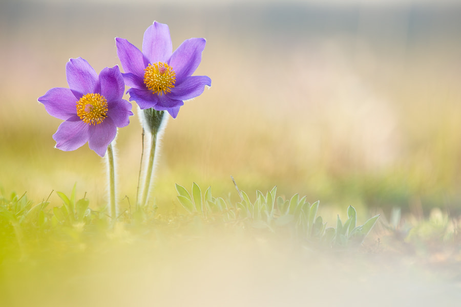Photograph Pastel colors by Marco Schöfl on 500px