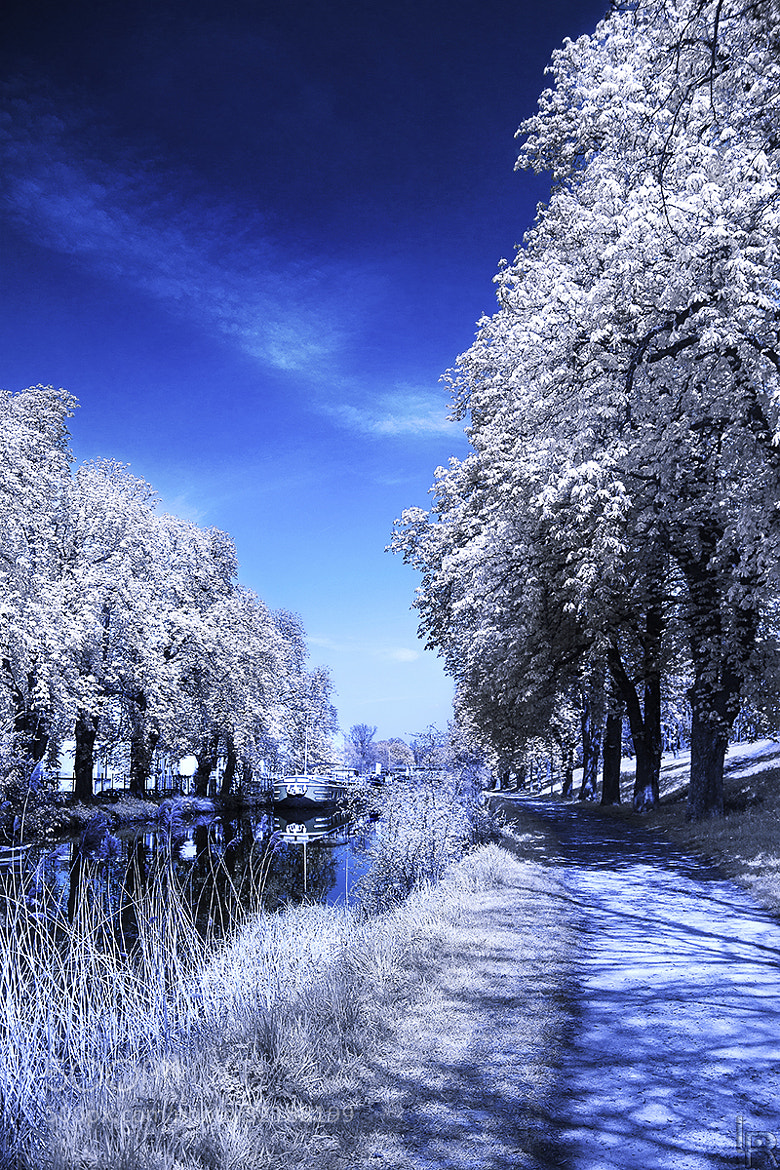 Photograph Infrared Test II by Emilie Filrouge on 500px