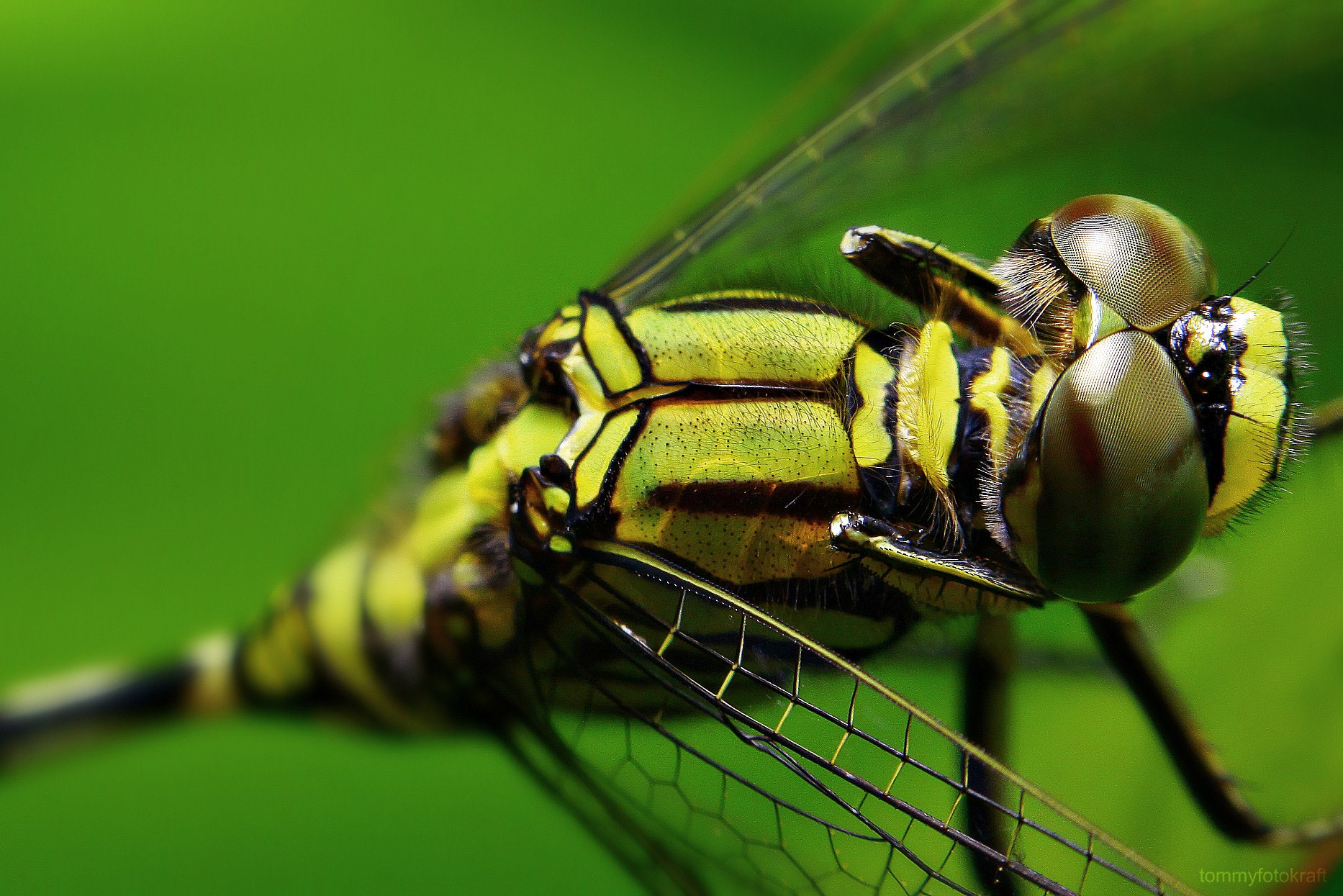 Photograph Slender Dragon Fly by The Fotokraft on 500px