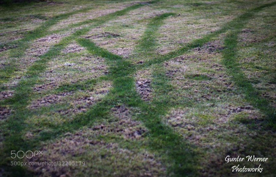 Photograph pattern in grass by Gunter Werner on 500px