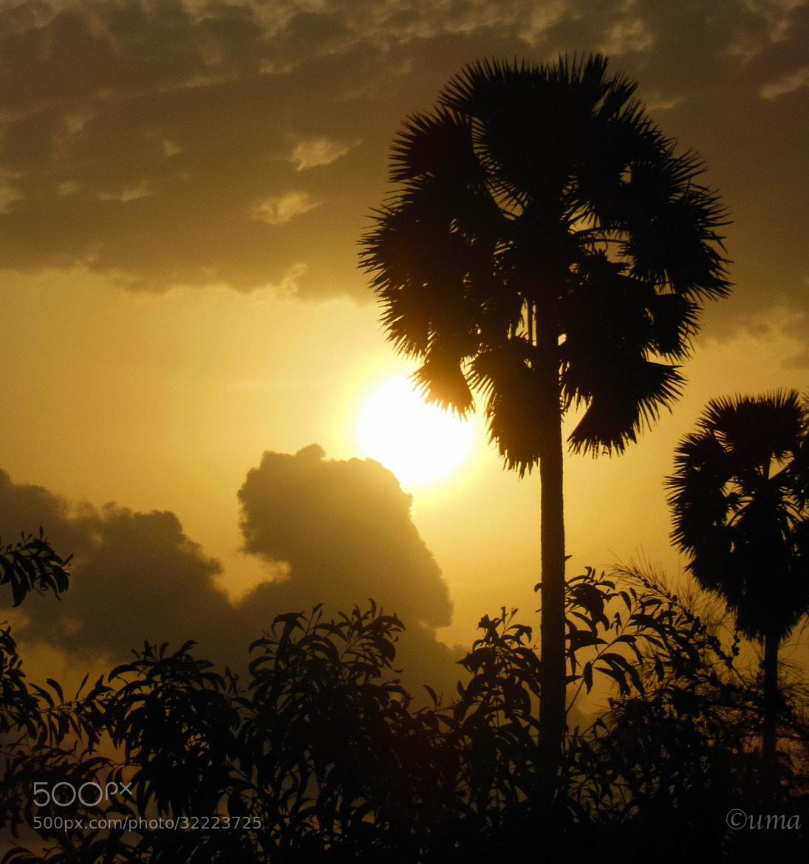 Photograph Sunset thru Palm tree by Uma Holla on 500px