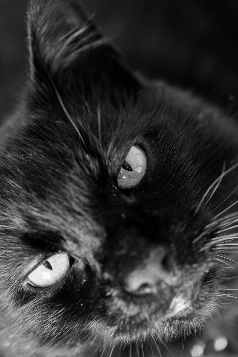 Photograph Cat's Eyes by Pepe Jeremy on 500px
