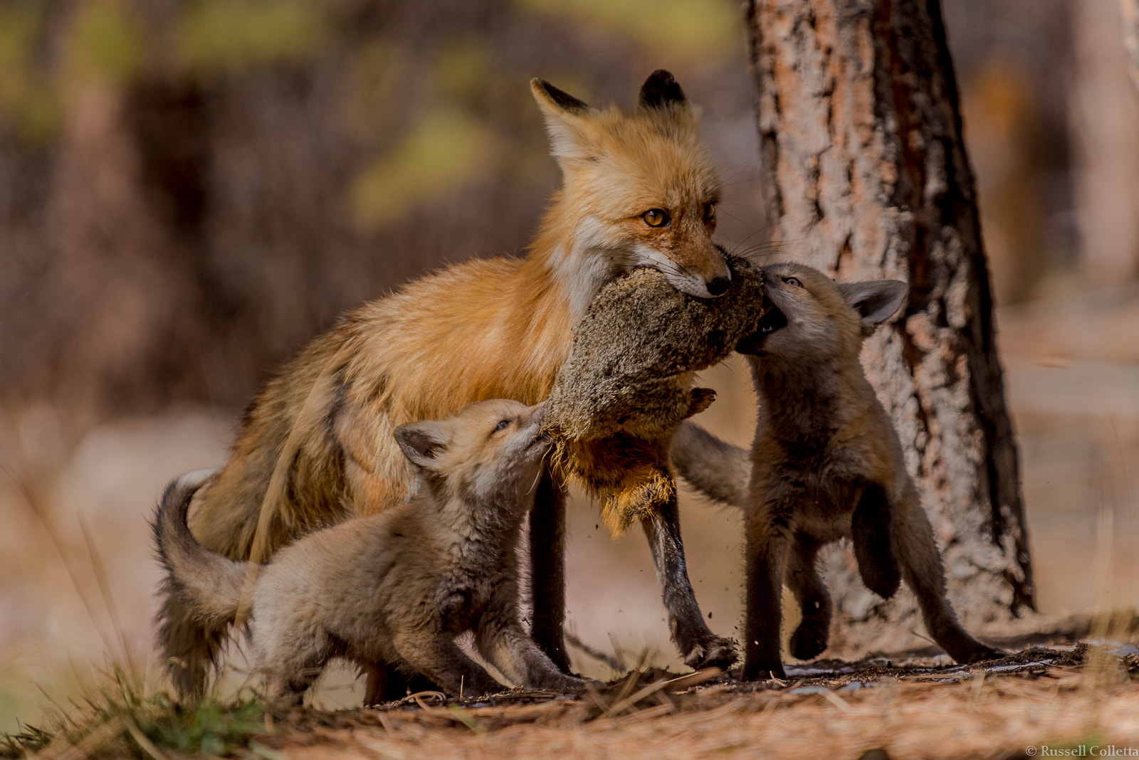 Photograph Family Mealtime by Russ Colletta on 500px