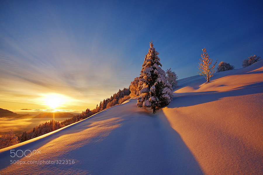 Photograph Winter beauty by Janez Tolar on 500px