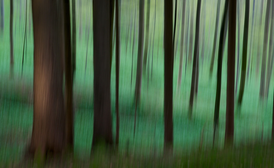 Photograph paintet forest by Koni Frey on 500px