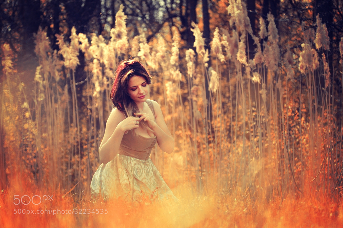Photograph Sunshine Land by Felicia Simion on 500px