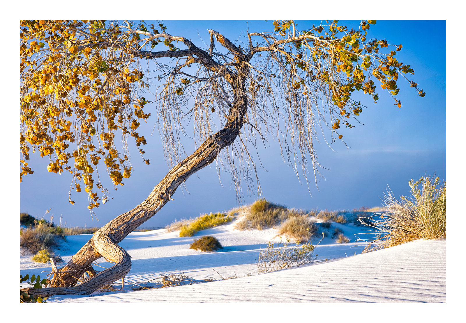 Photograph white sands national monument by bugeyed G on 500px