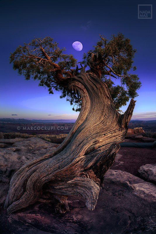 Photograph Night Guardian of the Valley - Happy Arbor Day 2013 (East Coast) by Marco Crupi on 500px