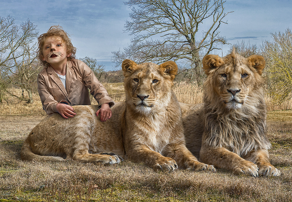 Photograph Lions ;) by Adrian Sommeling on 500px