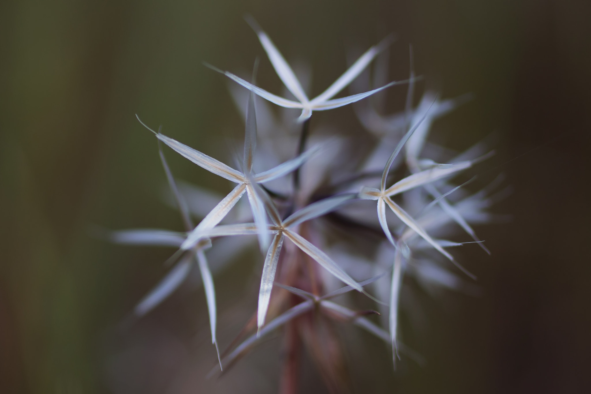 Photograph Silverpuffs by Amy Covington on 500px