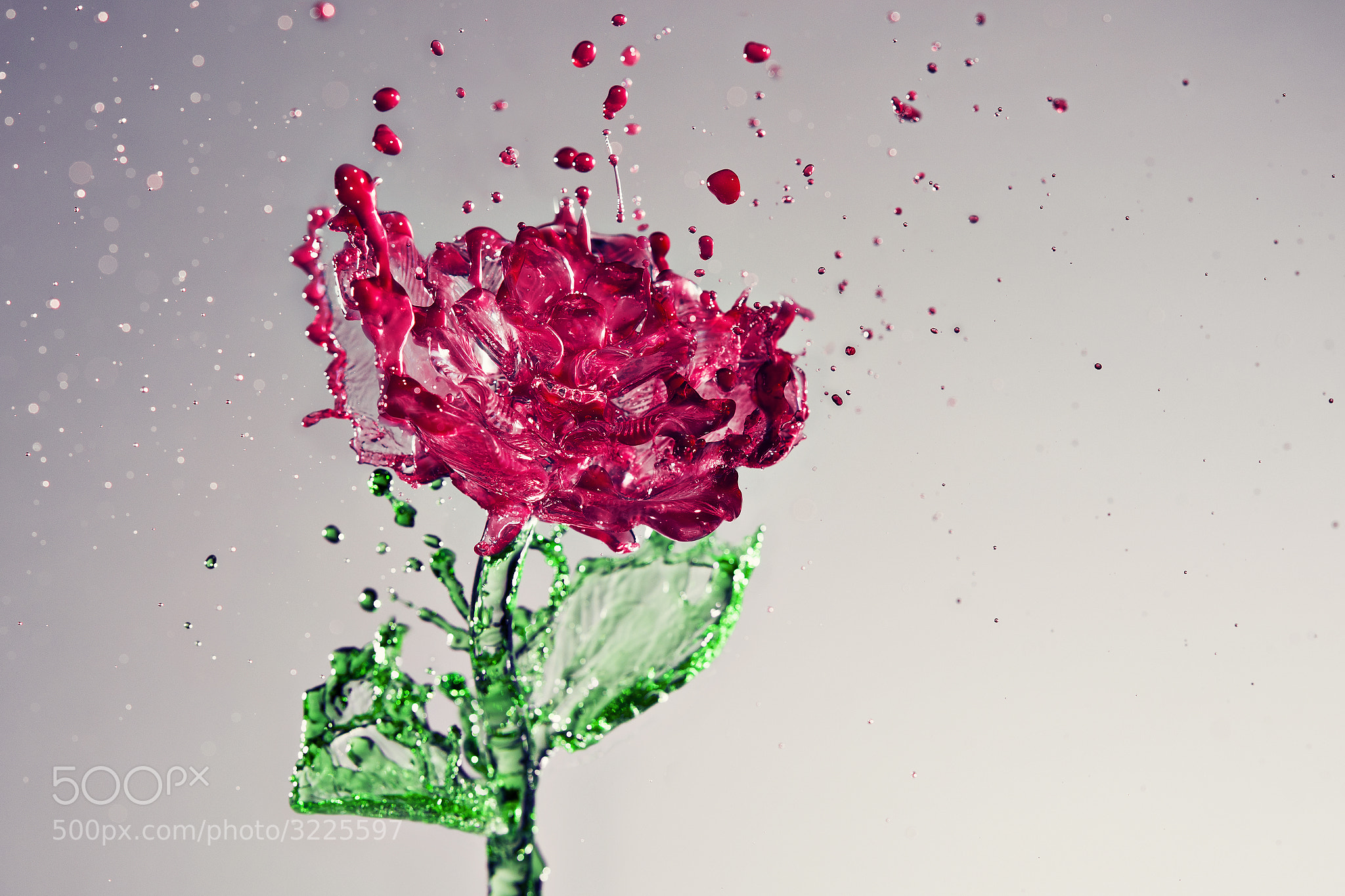 Photograph A Splash of Rose by Anthony Chang on 500px