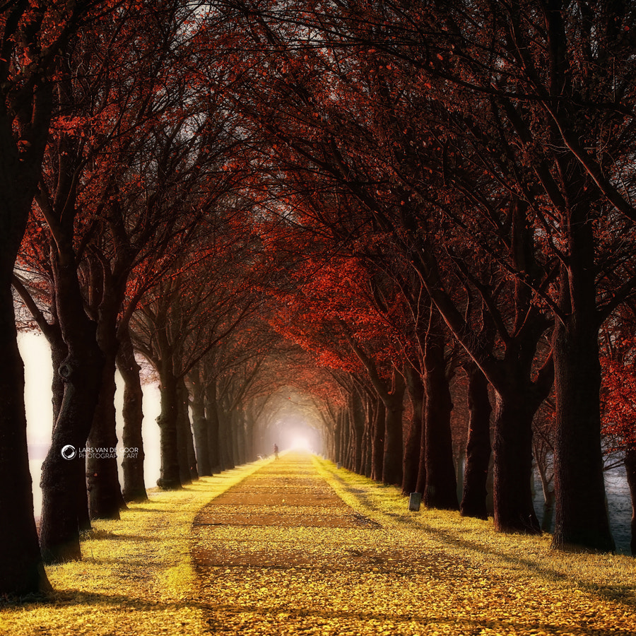 Photograph Untitled by Lars van de Goor on 500px