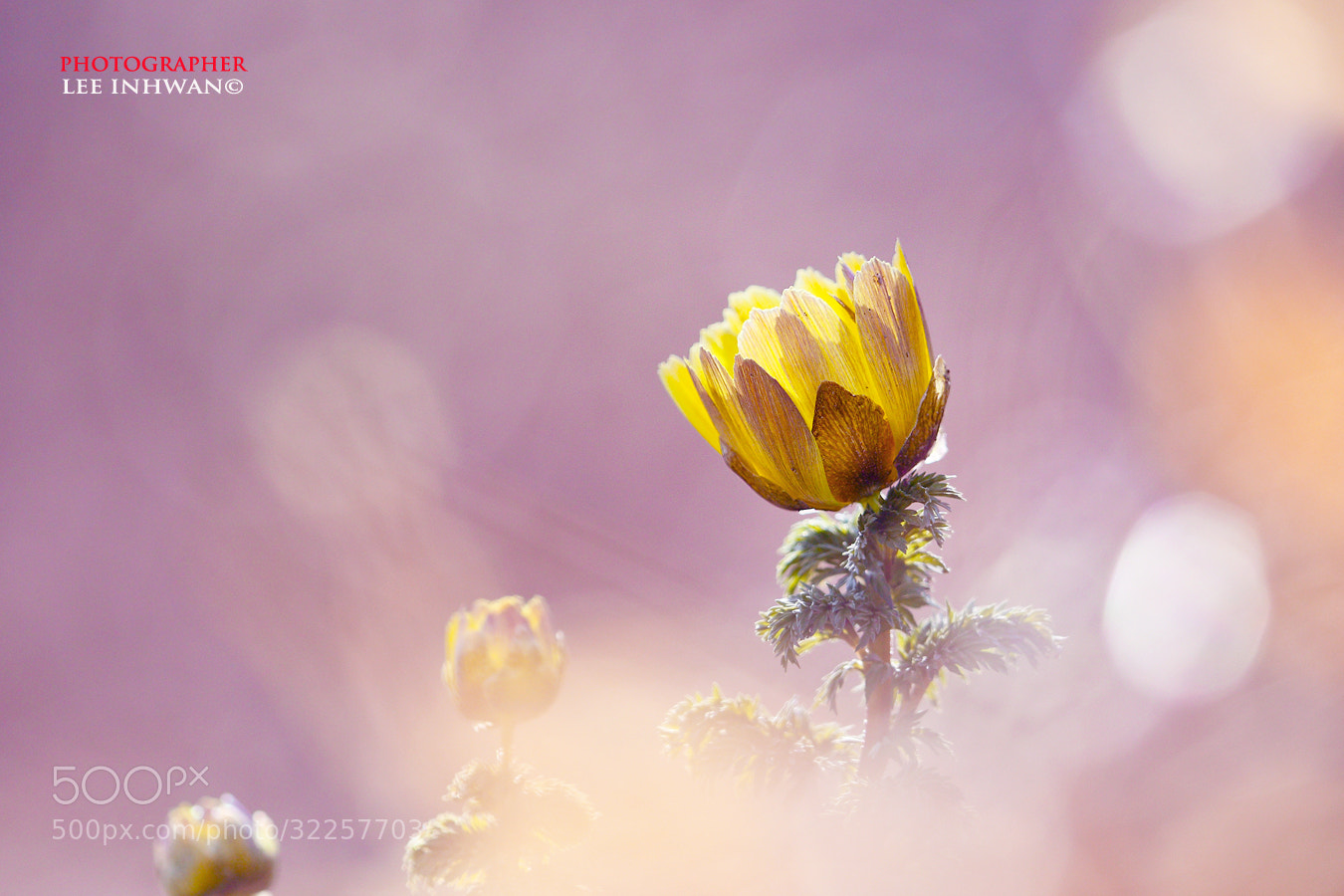 Photograph Adonis by LEE INHWAN on 500px