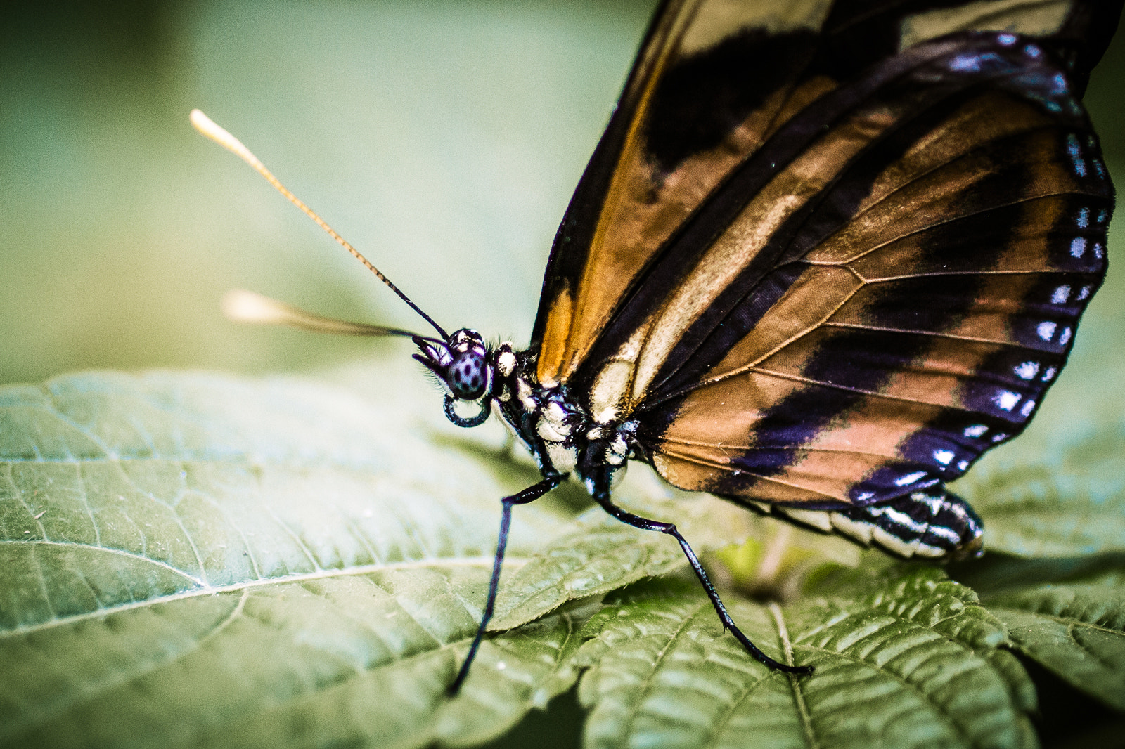 Photograph butterfly by Donato Romagnuolo on 500px