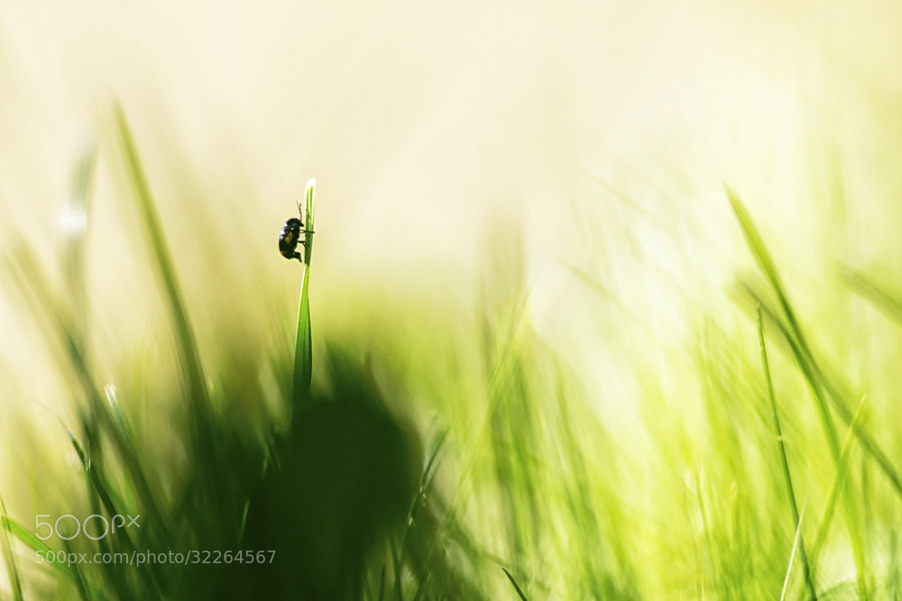 Photograph lost in blur by Markus Reugels on 500px