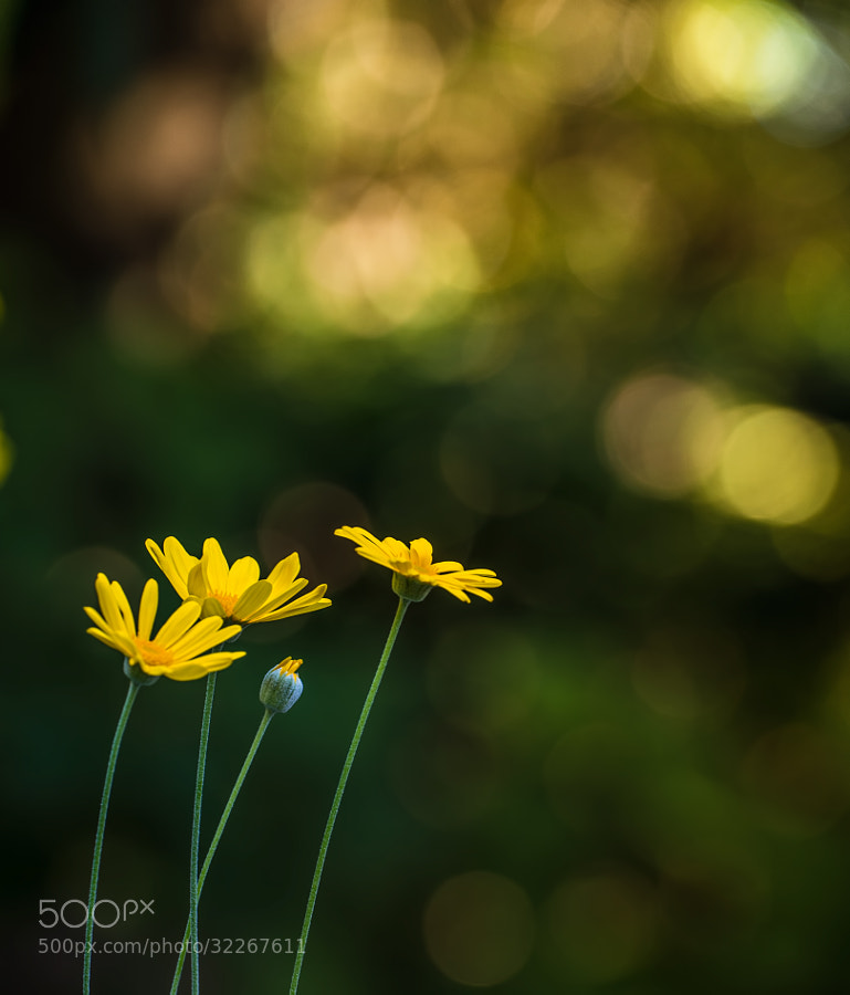 yellow flowers with some bokeh