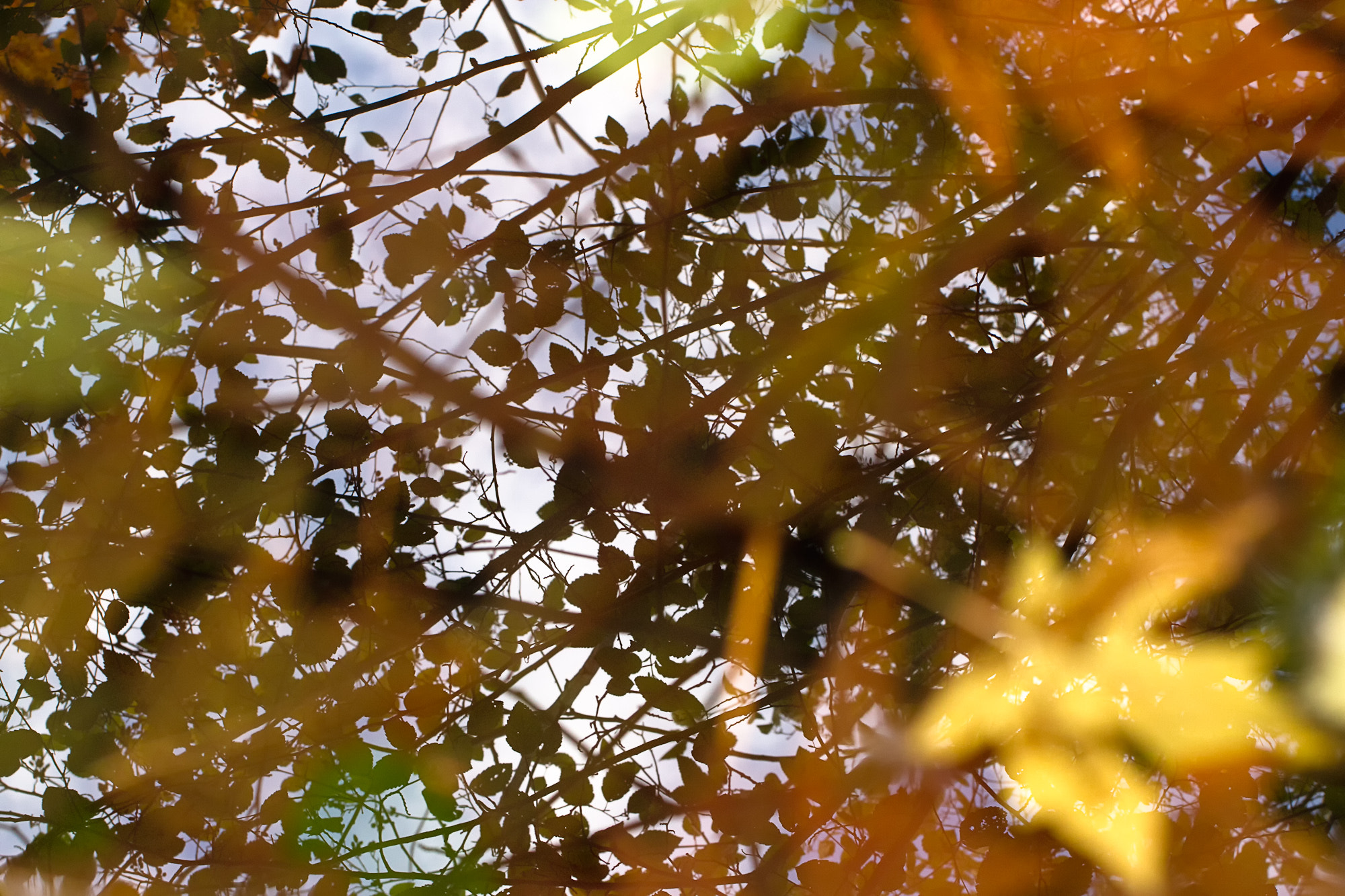 Photograph Fall in Water by Joseph Calev on 500px