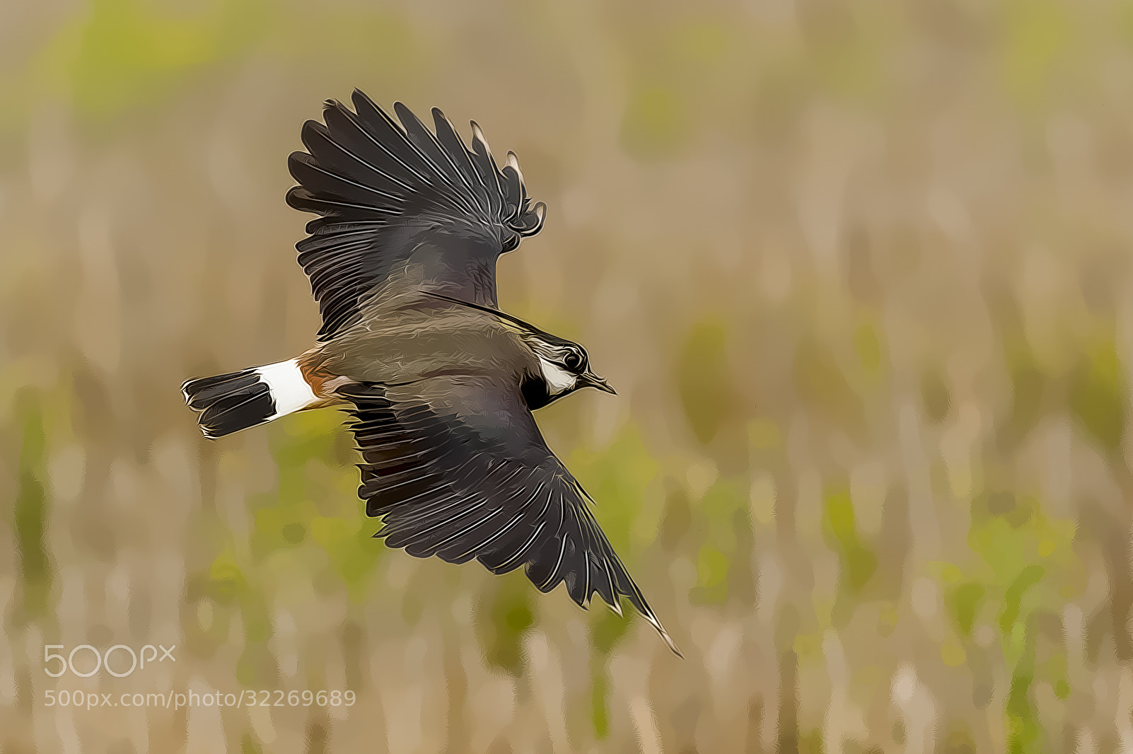 Photograph artistic Lapwing by Riccardo Trevisani on 500px