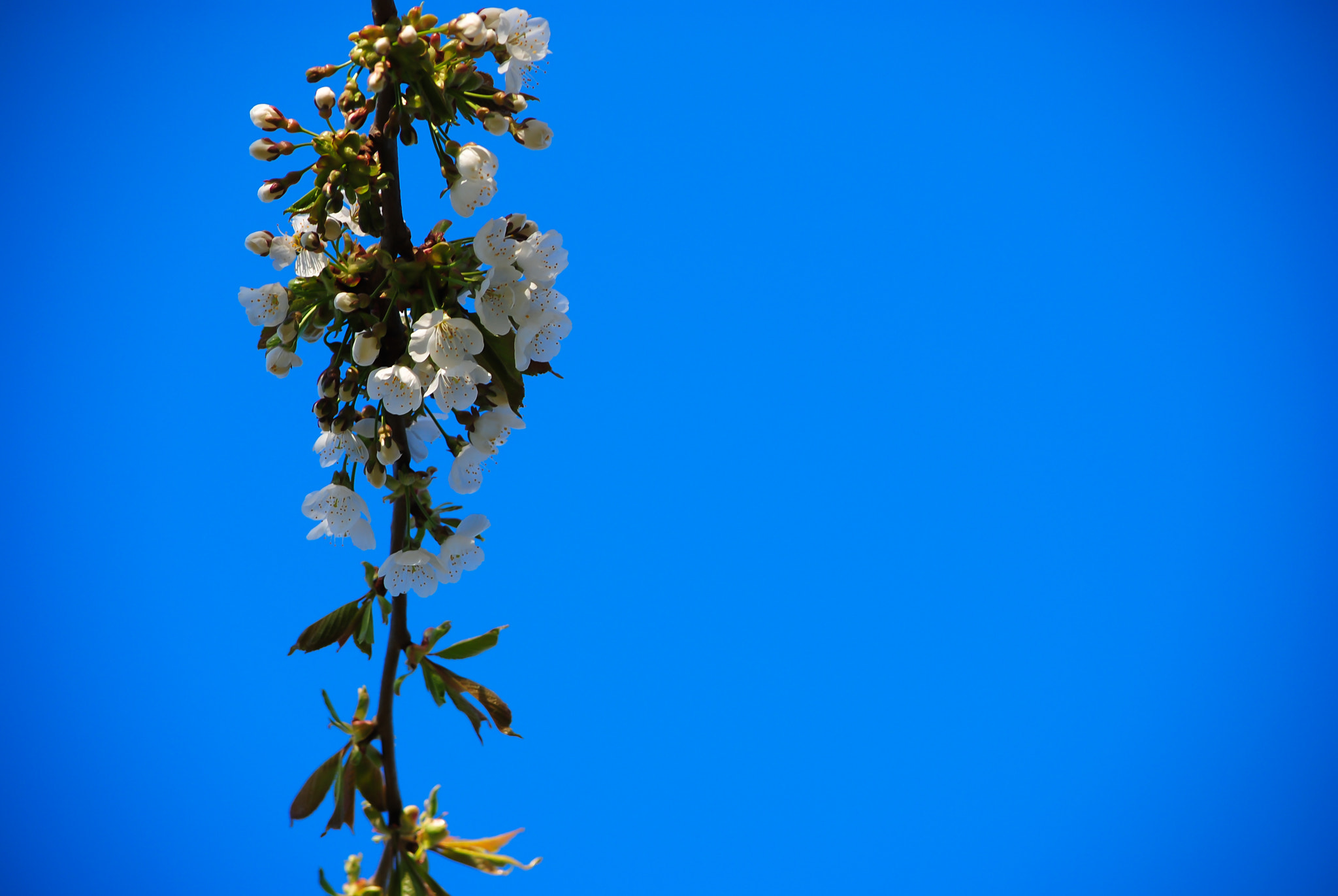 Photograph Blue sky and blossom by Sue 6 on 500px