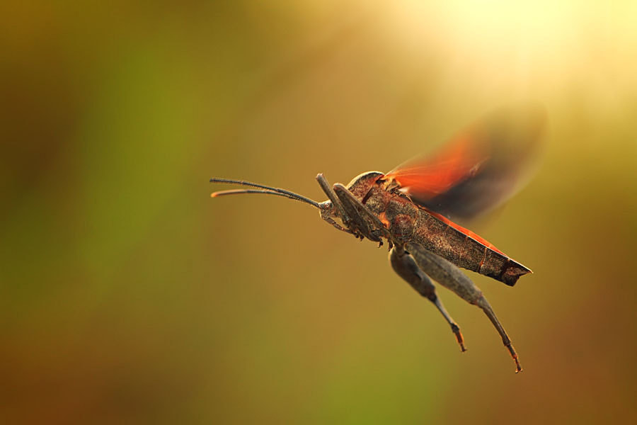 Photograph flying away by shikhei goh on 500px