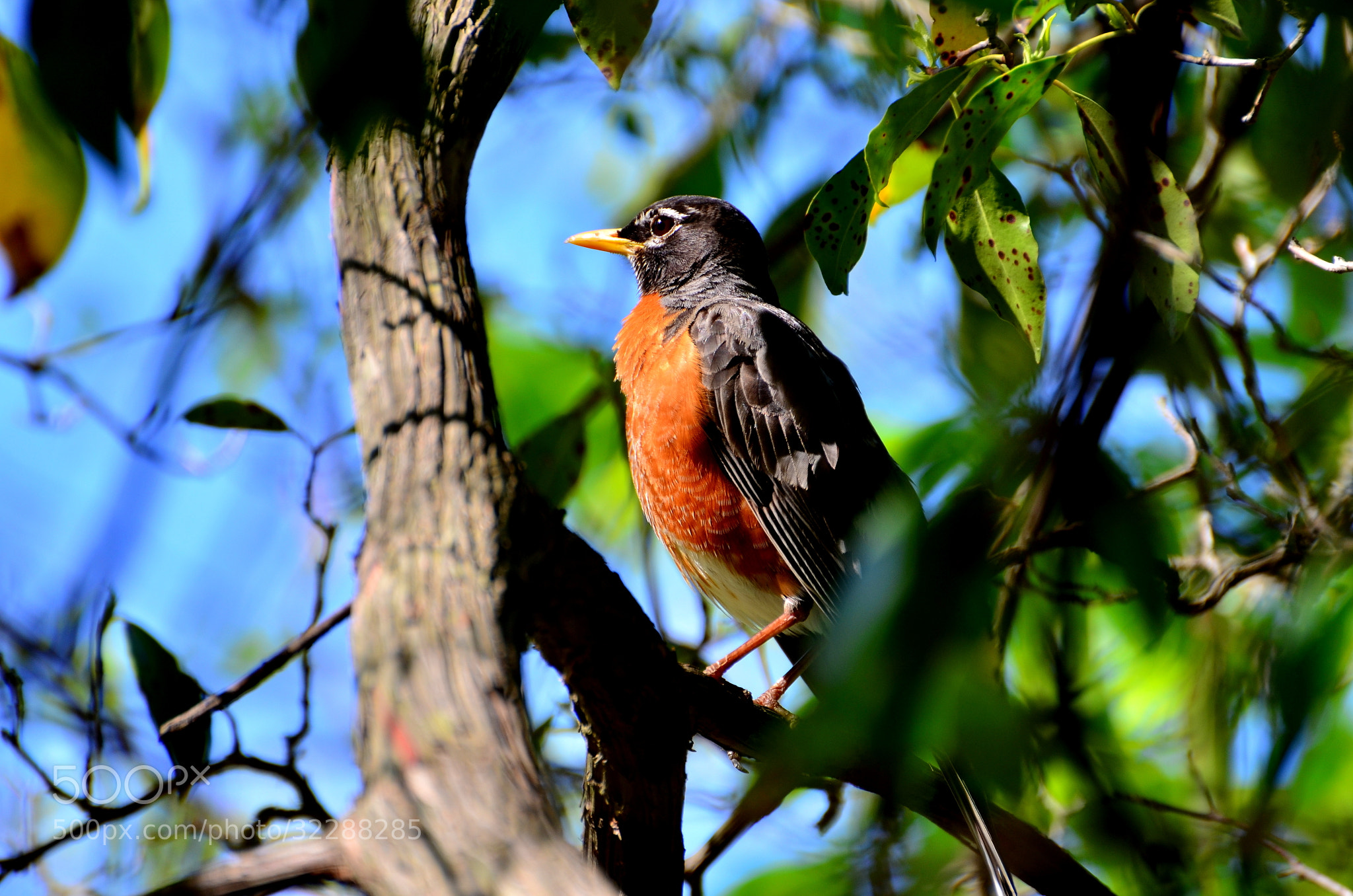 Photograph Robin near the lake  by Ioana  And Massimo  on 500px