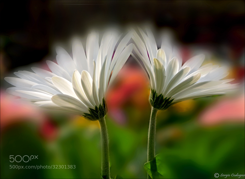 Photograph White dream by Sergio Codogno on 500px
