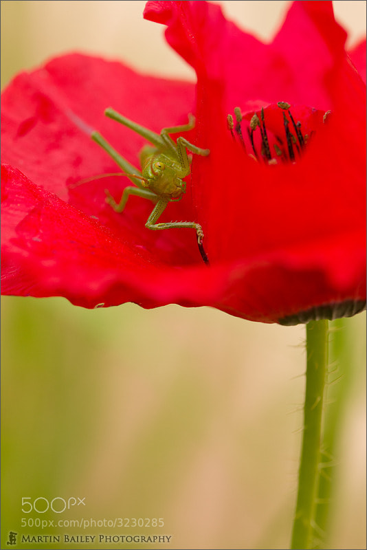Photograph Color Coordinated Cricket by Martin Bailey on 500px