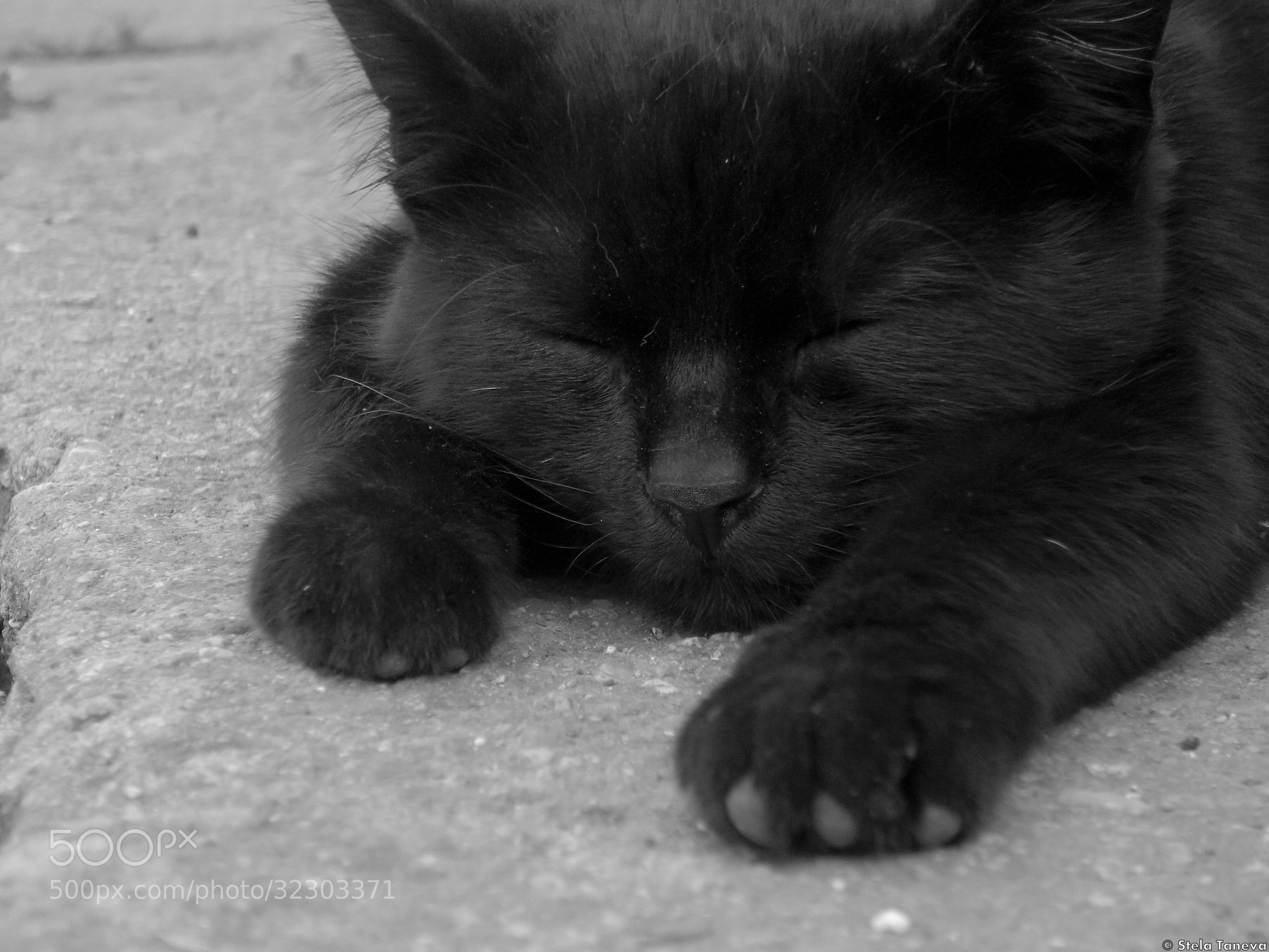 Photograph Siesta time by Stela Taneva on 500px