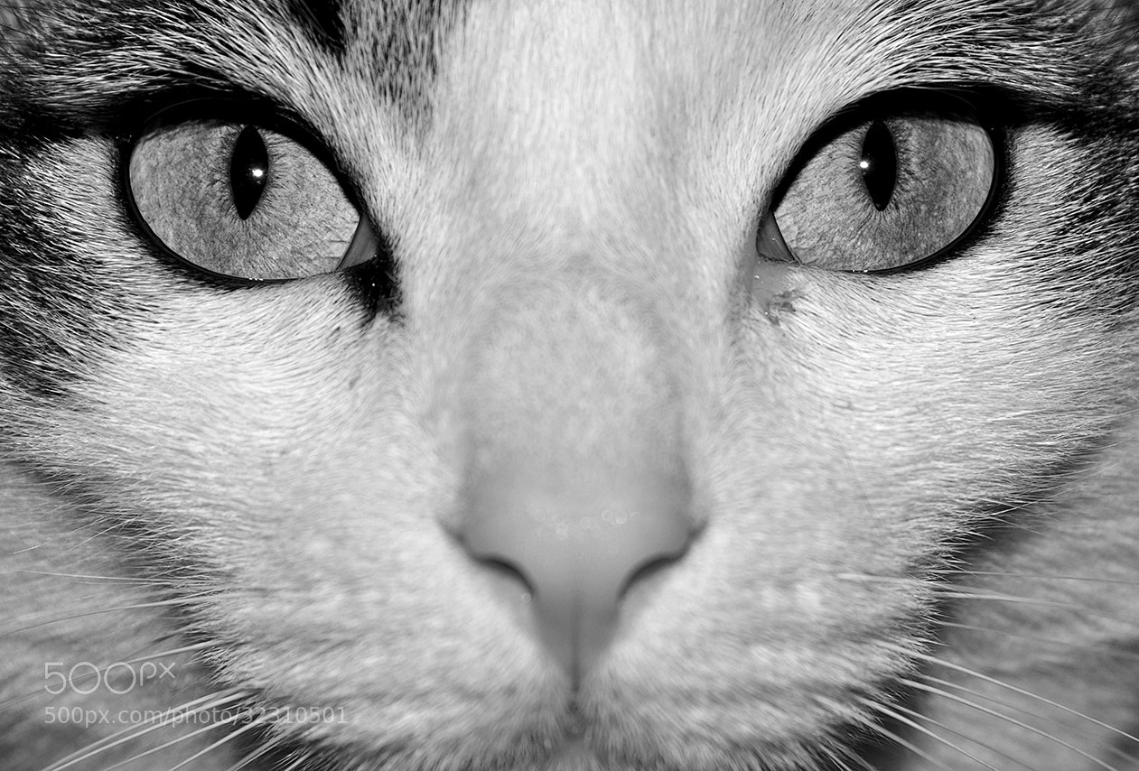 Photograph I see you! by Simone Furiosi on 500px